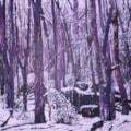 Llandogo Woods - Winter 1
