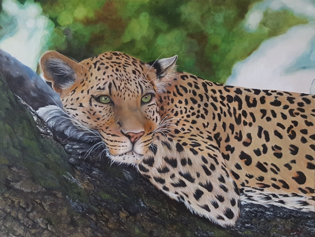 Leopard in Wonder