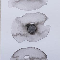 Monochrome poppies