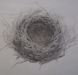 My Empty Nest