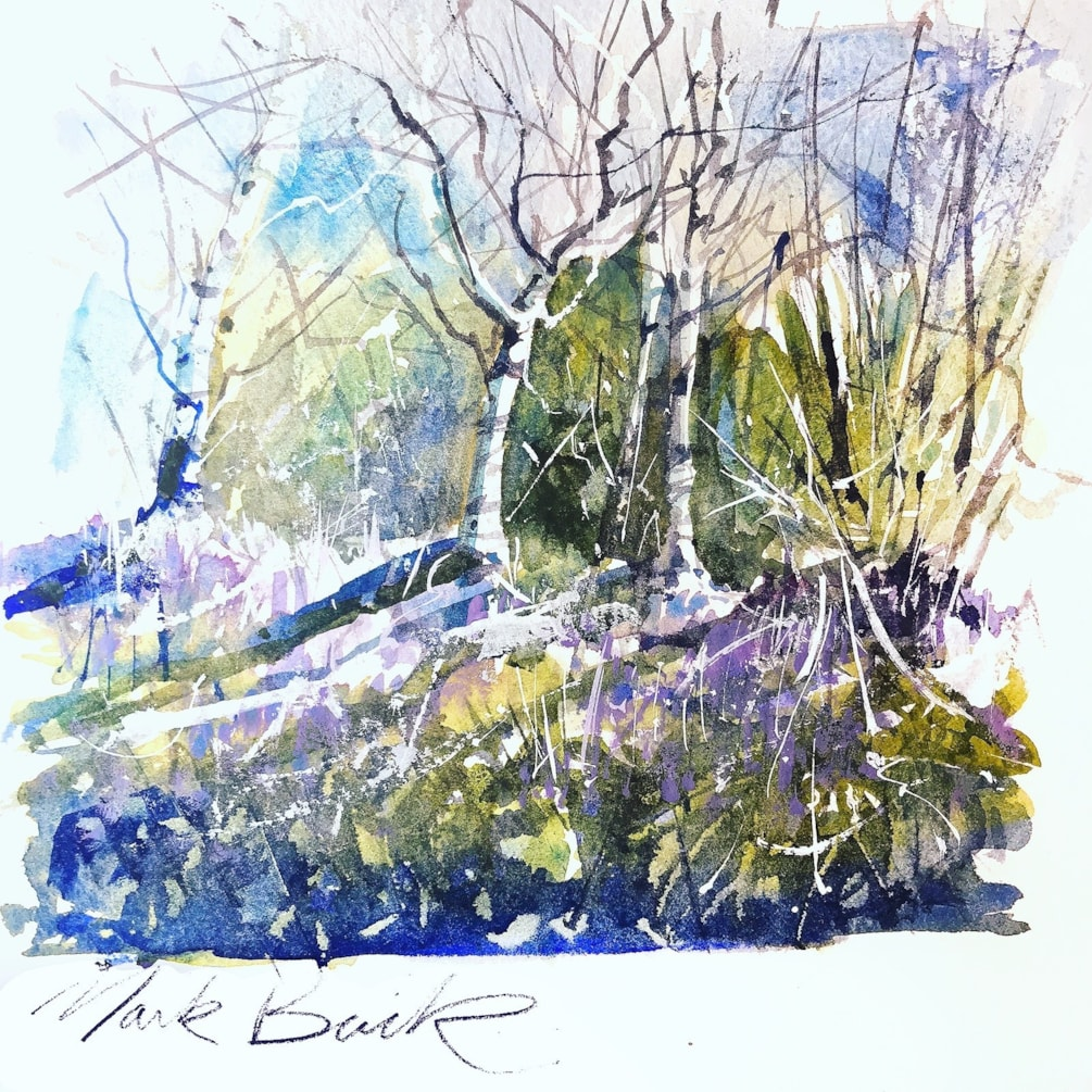 Bluebells and silver birches watercolour