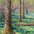 Bluebells & tree shadows, Rolvenden