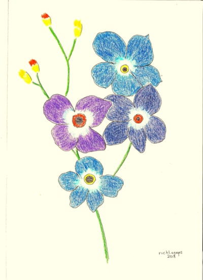 Forget - Me - Not (For a good cause)