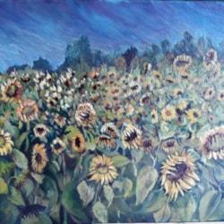 afternoon sunflower