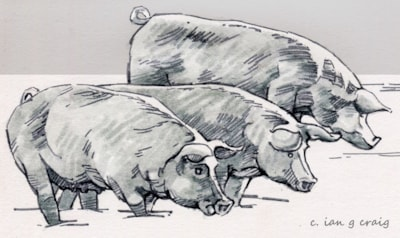 #animalmarch pigs
