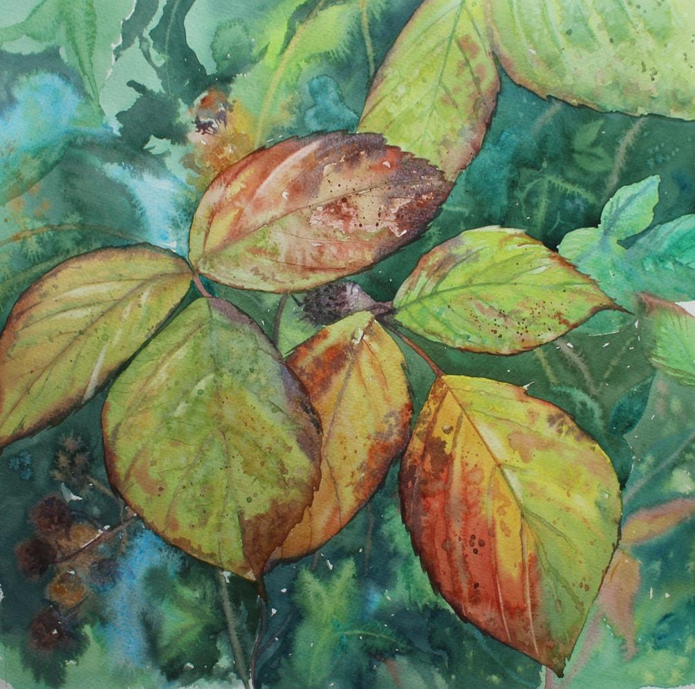 autumn brambling 72