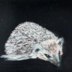 Another hedgehog