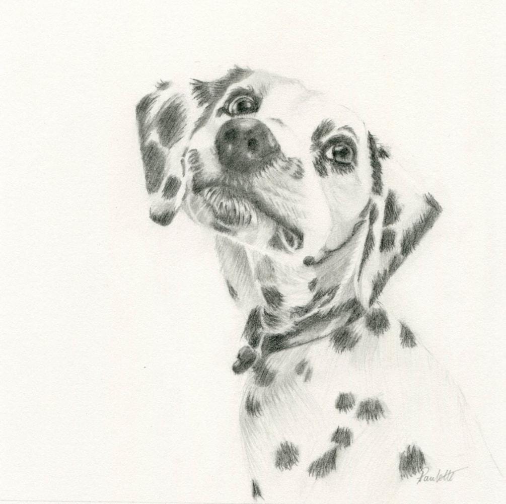 That Dalmatian Look