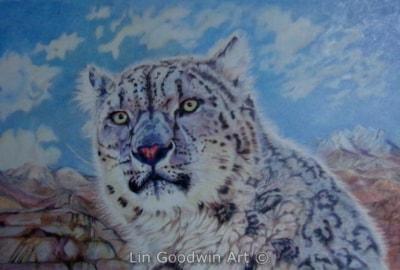 Irma, Himalayan Snow leopard