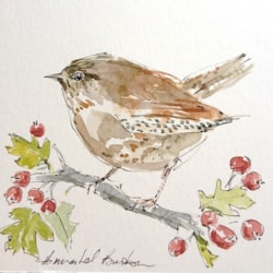 Wren with Hawthorn