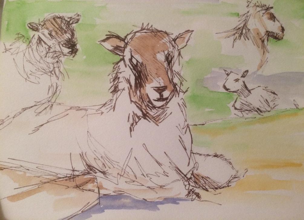 Feeling sheepish -sketch 1