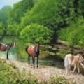 Horses by River Loddon