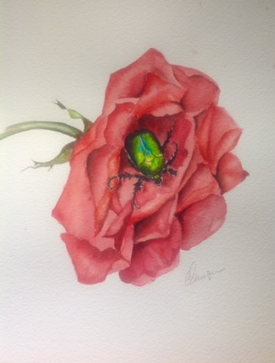 Rose with scarab beetle