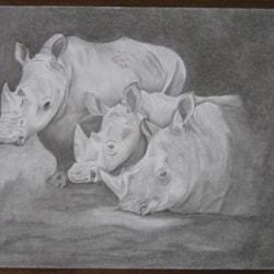 3 Rhino