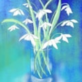 Snowdrops - iPad art for Henry Martin