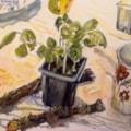 Pot of basil