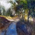 Dappled Light Along The Walking Trail