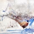 Pheasant in snow, watercolour