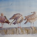 The herring gull family