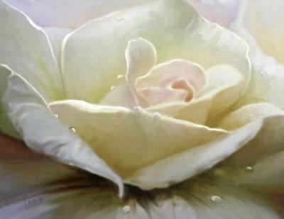 Rose's Tears