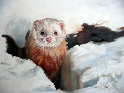 Ferret in snow