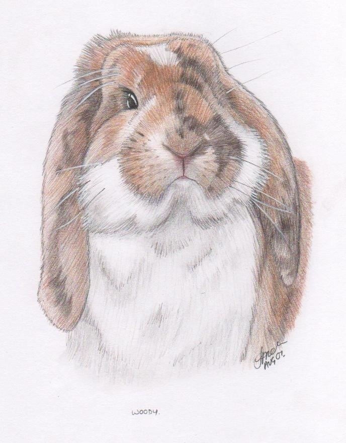 Woody the Bunny from 2007
