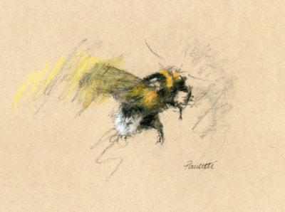 Charcoal Bee 01