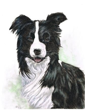 Jake the Collie
