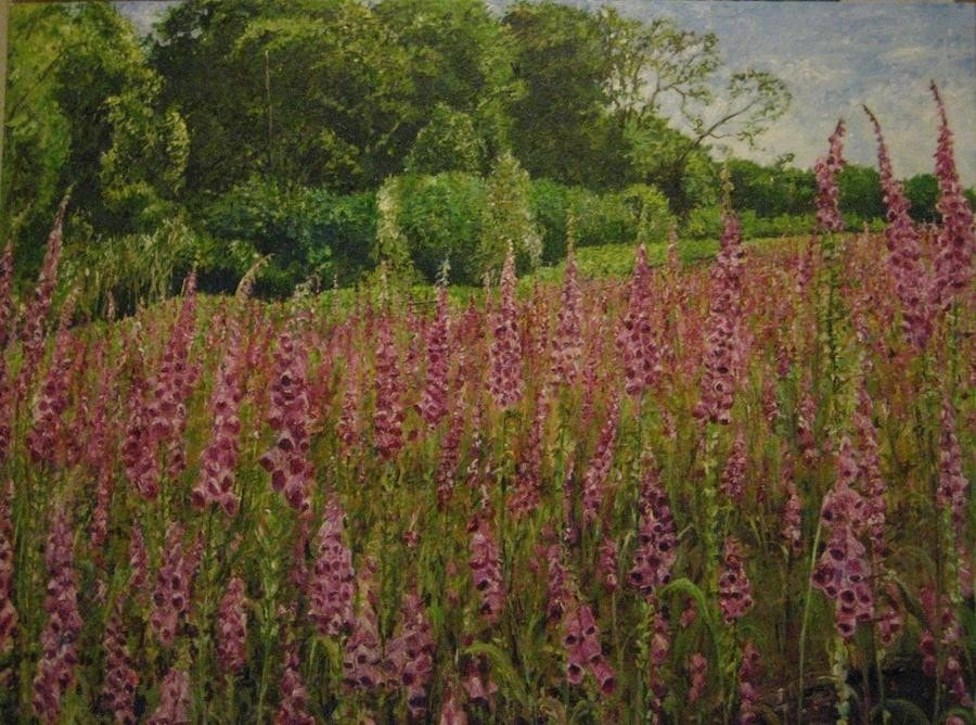 Llandogo Foxgloves 1