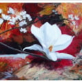 Magnolia on red