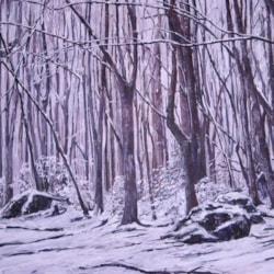 Llandogo Woods - Winter 2