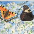Small Tortoiseshell butterflies in blosssom