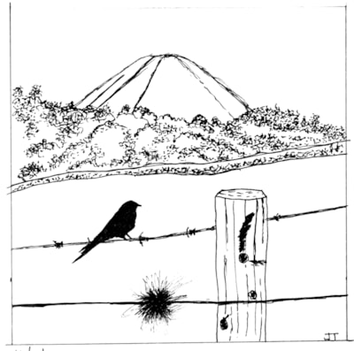 bird on wire drawing