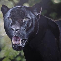 black leopard Imperium unfinished