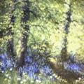 bluebell Edge pastel