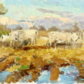 Winter sunlight, white cattle at Rippon Hall