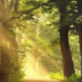 Morgana's Woods (WIP)