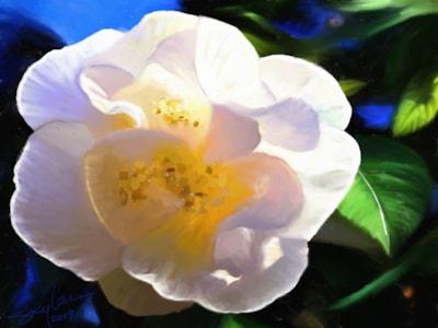 Camellia 30
