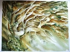 Hawthorn in Winter