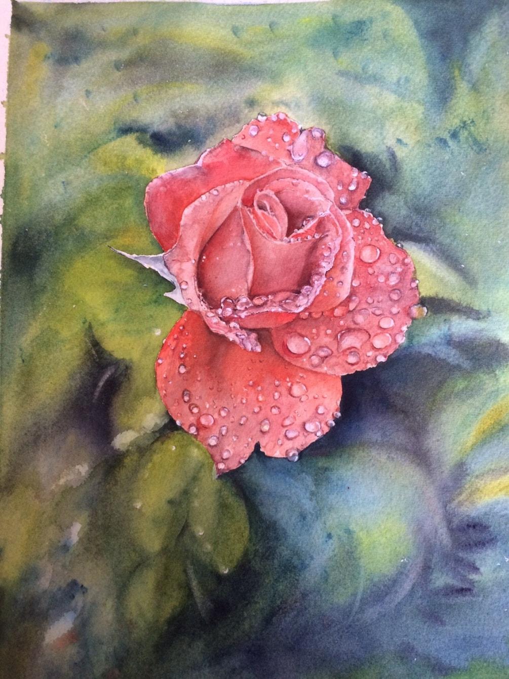 Rose with rain