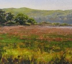 Ynys Hir Summer Grasses