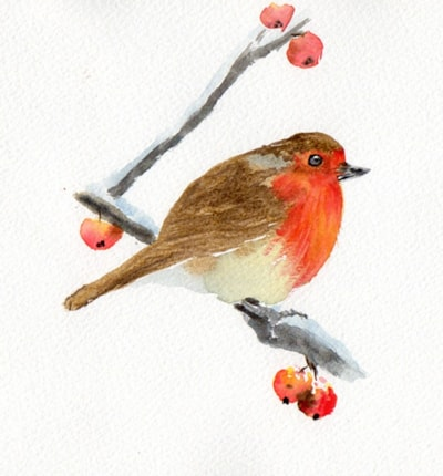 Robin with Hawthorn Berries