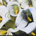Second Arum lilies