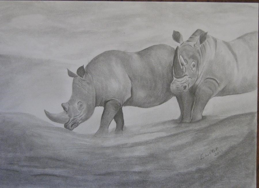 Let's save the Rhinos
