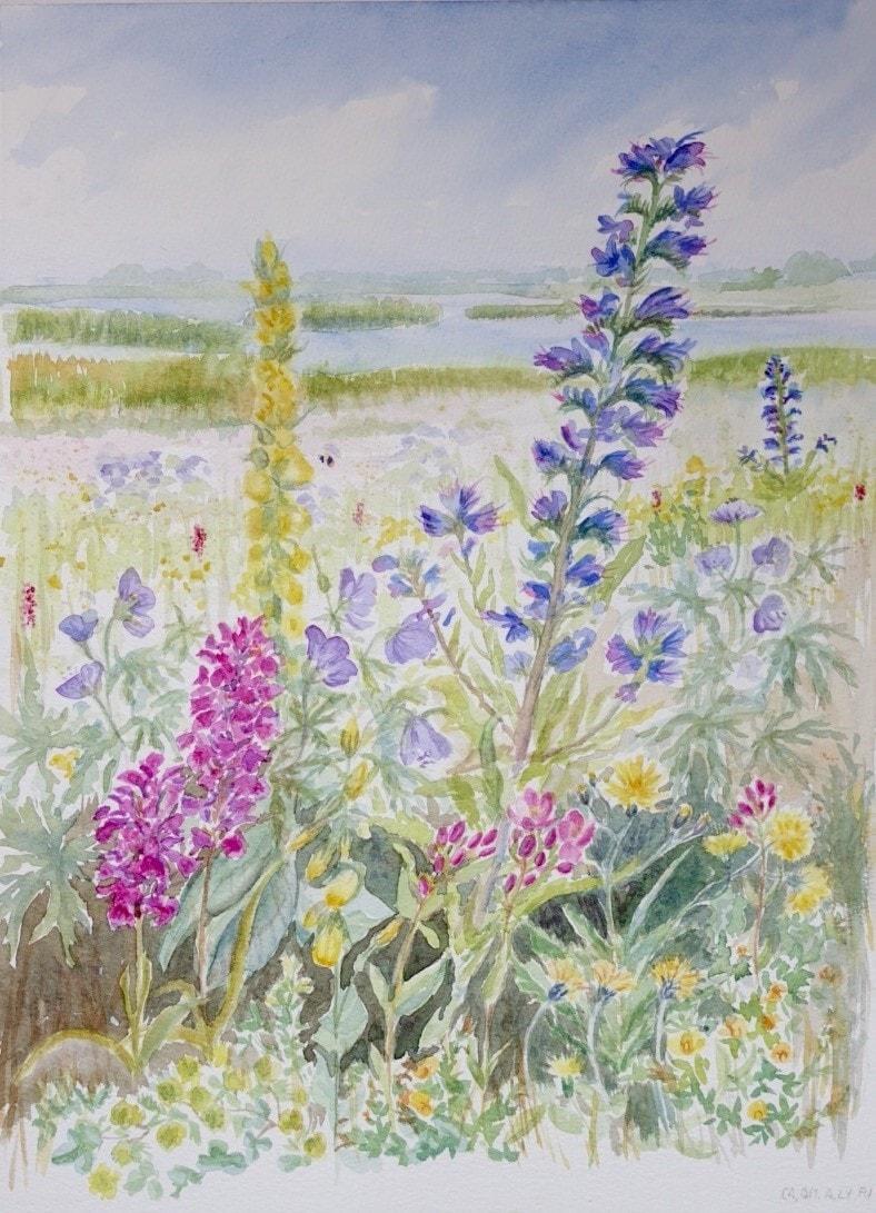 Wild flowers at Portrack Marsh