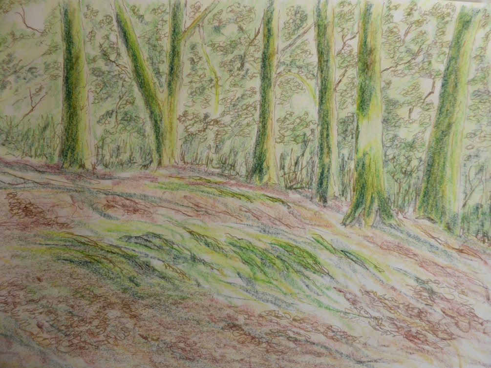 The Glade sketch, dip pen and ink and coloured pencil