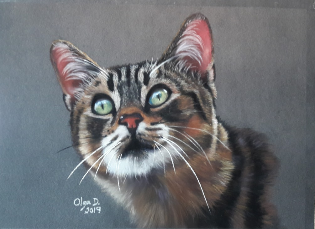 Expression of the cat