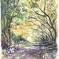 Bluebells amongst the mountain oaks, plein air watercolour
