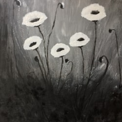 Poppies in black and white