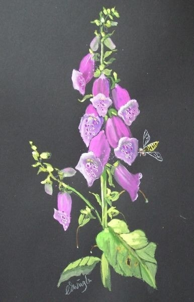 Pink Foxglove in gouache with hoverfly